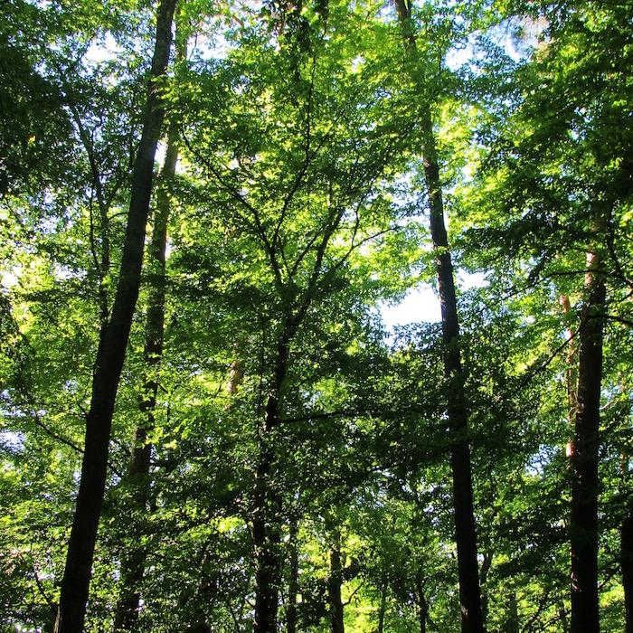 Forêt inspiration