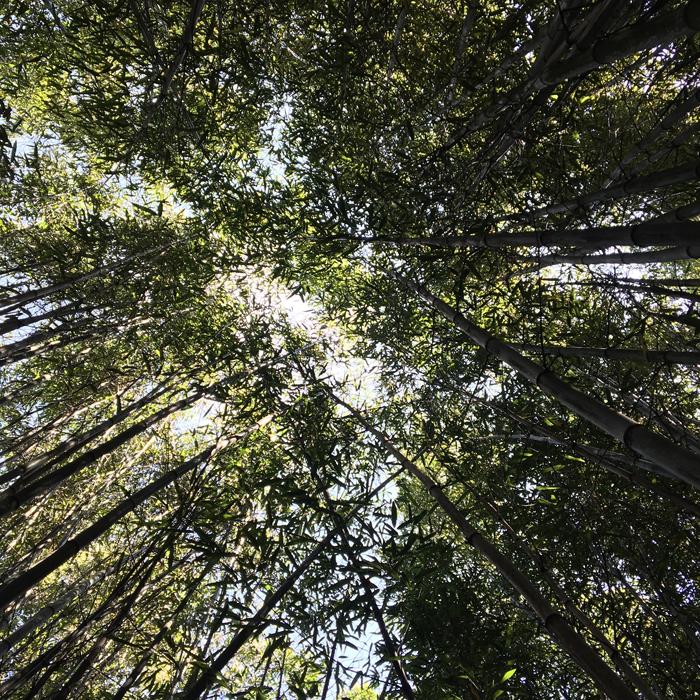 Der Wald, Inspirationsquelle für die FOREST Kollektion